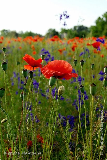 Добрый день! Лето радует нас буйством красок, пьянящими запахами, теплом и, надеюсь, хорошими впечатлениями... фото 31