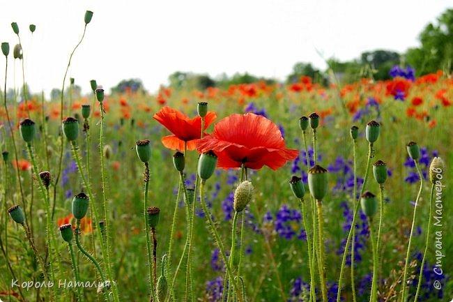 Добрый день! Лето радует нас буйством красок, пьянящими запахами, теплом и, надеюсь, хорошими впечатлениями... фото 32