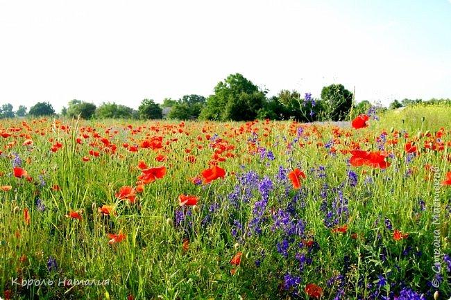 Добрый день! Лето радует нас буйством красок, пьянящими запахами, теплом и, надеюсь, хорошими впечатлениями... фото 35