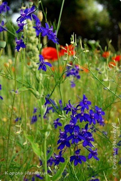 Добрый день! Лето радует нас буйством красок, пьянящими запахами, теплом и, надеюсь, хорошими впечатлениями... фото 36