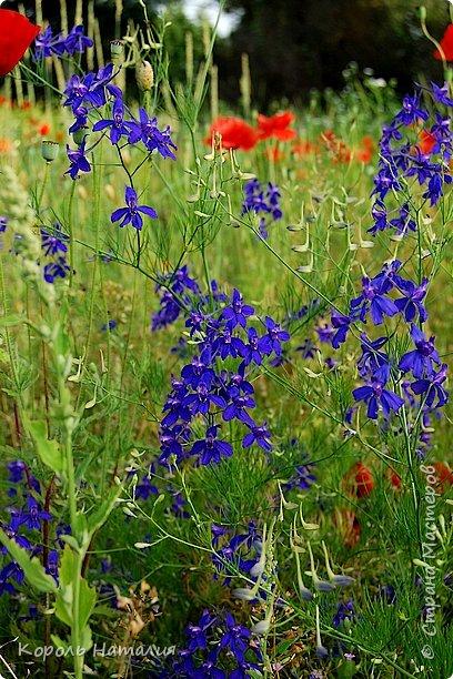 Добрый день! Лето радует нас буйством красок, пьянящими запахами, теплом и, надеюсь, хорошими впечатлениями... фото 37