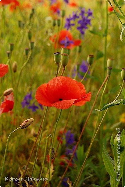 Добрый день! Лето радует нас буйством красок, пьянящими запахами, теплом и, надеюсь, хорошими впечатлениями... фото 39