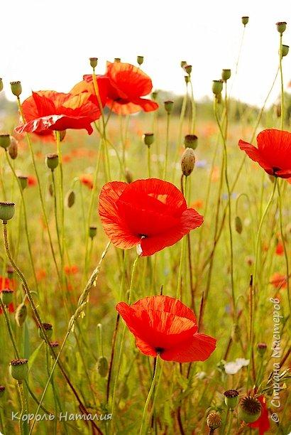 Добрый день! Лето радует нас буйством красок, пьянящими запахами, теплом и, надеюсь, хорошими впечатлениями... фото 41