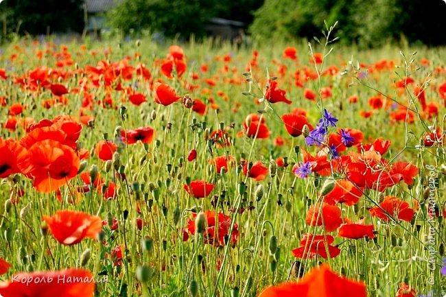 Добрый день! Лето радует нас буйством красок, пьянящими запахами, теплом и, надеюсь, хорошими впечатлениями... фото 43