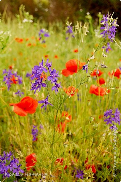 Добрый день! Лето радует нас буйством красок, пьянящими запахами, теплом и, надеюсь, хорошими впечатлениями... фото 44