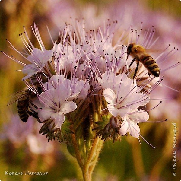 Добрый день! Лето радует нас буйством красок, пьянящими запахами, теплом и, надеюсь, хорошими впечатлениями... фото 48