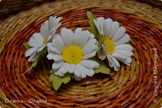 Ромашки - нежнейшие цветочки. фото 3