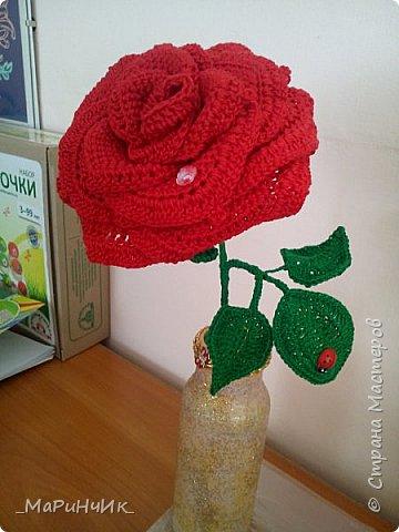 Красная РОЗА. фото 1