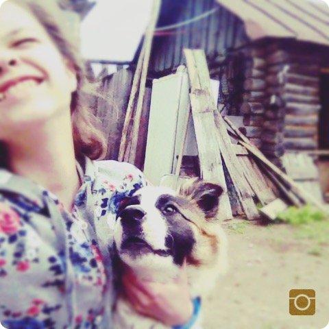 Дамы и господа! К вашему вниманию мои домашние животные. Меня зовут Дарья, мне 14 лет. У меня есть одна кошка породы Мейн-Кун и один котёнок породы Мейн-Кун. Так же есть собака которая живёт на даче   В нашей семье есть два дома. Один в городе, другой в деревне.  Давайте начнём с городского дома.  Здесь у нас население животных меньше, чем на даче, но они того стоят.   Это чистокровный Мейн-Кун.   Пару, а может и не пару слов о породе: Мейн-ку́н (англ. Maine Coon) — аборигенная порода кошек Соединенных Штатов Америки, которая произошла от кошек, проживающих на фермах Северо-Восточной Америки в штате Мэн. Первоначально мейн-кунами называли только кошек окраса чёрный табби. Из-за окраса шерсти, мощного сложения и огромного хвоста эти кошки внешне напоминали енотов (отсюда и название породы — буквально «мэнский енот». «Maine» — название штата Мэн, «coon» — вторая часть слова «raccoon», то есть «енот»). Кошки породы мейн-кун отличаются дружелюбным характером и особенно крупным размером. Среди домашних кошек это крупная порода: самцы могут иметь массу 15 килограммов, самки до 8 килограммов. Хотя у мейн-кунов полудлинная шерсть, кошки этой породы не требуют частого расчёсывания, как, например, персы.   Тело и размер: Крупная порода среди домашних кошек (отдельные особи достигают 15 килограммов в весе). Максимальная зарегистрированная длина тела 1,23 метра. От крупного до очень крупного, мускулистое, растянутое и ширококостное тело прямоугольного формата. Мускулистая шея имеет среднюю длину. Конечности средней длины, крепкие, мускулистые, лапы большие с пучками волос между подушечками. Хвост длинный, как минимум до плеча, сужается к заострённому кончику, опушён струящейся шерстью.  Характер: Дружелюбный, миролюбивый и покладистый. Мейн-куны очень аккуратные — если на пути животного препятствие, не скинет, а обойдёт. Если есть когтеточка, мебель будет в порядке. Мейн-кун не любит узкое пространство, поэтому никуда не лазает. Несмотря на большой размер и немного грозный вид,