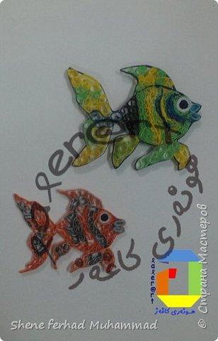 fish фото 1