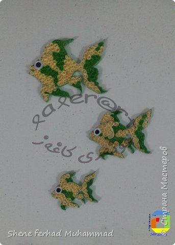 fish фото 3