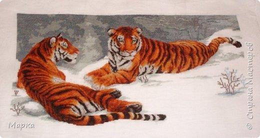 Мои  работы, за последний год. Амурские тигры. Размер 28*34  фото 1
