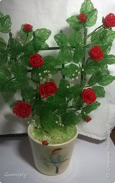 Вот такая красная плетистая розочка у меня получилась. Решила также выложить пошаговый процесс ее создания, мало ли, кому пригодится) фото 1