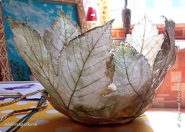 Ваза из скелетированных листьев  Честно говоря, это моя первая ваза в этой технике. Увидела в интернете работы известной японской мастерицы-художницый Кэй Секимачи и решила попробовать. Но сначала нужно было научиться скелетировать листья. Нашла в интернете как это делается. Там много методов предлагают. Сначала ничего не получалось. Листья либо вообще растворялись, либо рвались. Наконец удалось получить несколько листьев. Листья нужно выбирать жёсткие на ошупь. Подходят листья: дуба, клёна, каштана, тополя, плюща. Кипятила в растворе (брала порошок Rohrfrei-средство для чистки труб). Потом щёточкой очень осторожно снимала из картонала мякоть, пока лист не станет прозрачным. Потом заливала Доместосом с хлором и высушивала. Прогладила. А дальше не знала, что делать. В статье об этой японской мастерице не рассказывается, как она делала эти вазы. Упоминается только, что она использовала спец. бумагу. У меня такой бумаги нет. Вообщим я подумала, не использовать ли мне органзу. Приклеила органзу с обеих сторон к листу. Электровыжегателем вырезала по контуру листа. Покрыла бесцветным лаком… Вырезала кружочек из картона и приклеила к нему листья. Всё. Конечно получилась ваза не без недостатков, но я учусь. Уже когда сделала ,подумала ,что будет лучше вместо картонного кружка использовать какую -нибудь крышку с бортиком-железную или пластмассовую. И ещё, может быть кому -нибудь пригодится, Пробовала, тоже уже когда сделала вазу, не кипятить, а замочить в горячем растворе на несколько дней. Получается. И ещё , хочу предупредить, работать ОБЯЗАТЕЛЬНО в резиновых перчатках и желательно в маске. Раствор ОЧЕНЬ ядовитый. Поэтому детям лучше этим не заниматься!  фото 1