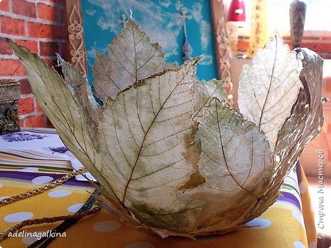 Ваза из скелетированных листьев  Честно говоря, это моя первая ваза в этой технике. Увидела в интернете работы известной японской мастерицы-художницый Кэй Секимачи и решила попробовать. Но сначала нужно было научиться скелетировать листья. Нашла в интернете как это делается. Там много методов предлагают. Сначала ничего не получалось. Листья либо вообще растворялись, либо рвались. Наконец удалось получить несколько листьев. Листья нужно выбирать жёсткие на ошупь. Подходят листья: дуба, клёна, каштана, тополя, плюща. Кипятила в растворе (брала порошок Rohrfrei-средство для чистки труб). Потом щёточкой очень осторожно снимала из картонала мякоть, пока лист не станет прозрачным. Потом заливала Доместосом с хлором и высушивала. Прогладила. А дальше не знала, что делать. В статье об этой японской мастерице не рассказывается, как она делала эти вазы. Упоминается только, что она использовала спец. бумагу. У меня такой бумаги нет. Вообщим я подумала, не использовать ли мне органзу. Приклеила органзу с обеих сторон к листу. Электровыжегателем вырезала по контуру листа. Покрыла бесцветным лаком… Вырезала кружочек из картона и приклеила к нему листья. Всё. Конечно получилась ваза не без недостатков, но я учусь. Уже когда сделала ,подумала ,что будет лучше вместо картонного кружка использовать какую -нибудь крышку с бортиком-железную или пластмассовую. И ещё, может быть кому -нибудь пригодится, Пробовала, тоже уже когда сделала вазу, не кипятить, а замочить в горячем растворе на несколько дней. Получается. И ещё , хочу предупредить, работать ОБЯЗАТЕЛЬНО в резиновых перчатках и желательно в маске. Раствор ОЧЕНЬ ядовитый. Поэтому детям лучше этим не заниматься!  фото 2