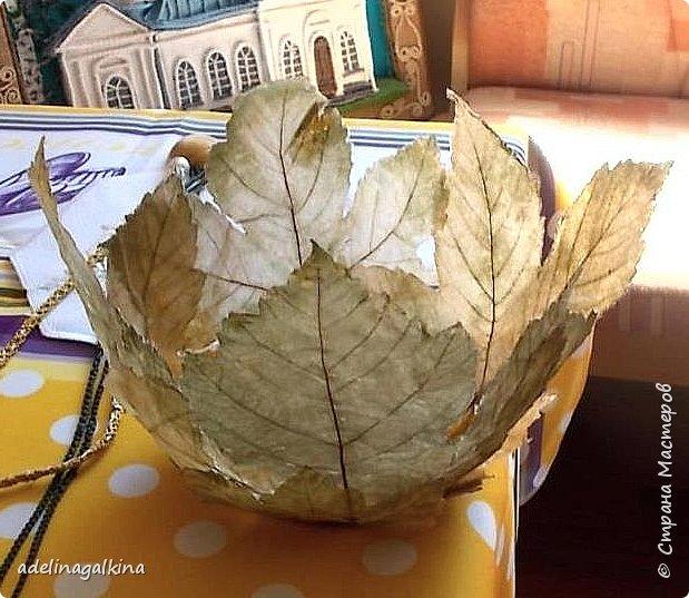 Ваза из скелетированных листьев  Честно говоря, это моя первая ваза в этой технике. Увидела в интернете работы известной японской мастерицы-художницый Кэй Секимачи и решила попробовать. Но сначала нужно было научиться скелетировать листья. Нашла в интернете как это делается. Там много методов предлагают. Сначала ничего не получалось. Листья либо вообще растворялись, либо рвались. Наконец удалось получить несколько листьев. Листья нужно выбирать жёсткие на ошупь. Подходят листья: дуба, клёна, каштана, тополя, плюща. Кипятила в растворе (брала порошок Rohrfrei-средство для чистки труб). Потом щёточкой очень осторожно снимала из картонала мякоть, пока лист не станет прозрачным. Потом заливала Доместосом с хлором и высушивала. Прогладила. А дальше не знала, что делать. В статье об этой японской мастерице не рассказывается, как она делала эти вазы. Упоминается только, что она использовала спец. бумагу. У меня такой бумаги нет. Вообщим я подумала, не использовать ли мне органзу. Приклеила органзу с обеих сторон к листу. Электровыжегателем вырезала по контуру листа. Покрыла бесцветным лаком… Вырезала кружочек из картона и приклеила к нему листья. Всё. Конечно получилась ваза не без недостатков, но я учусь. Уже когда сделала ,подумала ,что будет лучше вместо картонного кружка использовать какую -нибудь крышку с бортиком-железную или пластмассовую. И ещё, может быть кому -нибудь пригодится, Пробовала, тоже уже когда сделала вазу, не кипятить, а замочить в горячем растворе на несколько дней. Получается. И ещё , хочу предупредить, работать ОБЯЗАТЕЛЬНО в резиновых перчатках и желательно в маске. Раствор ОЧЕНЬ ядовитый. Поэтому детям лучше этим не заниматься!  фото 3