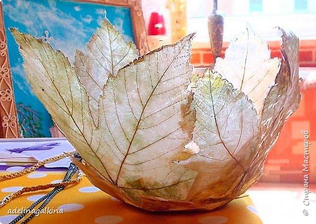Ваза из скелетированных листьев  Честно говоря, это моя первая ваза в этой технике. Увидела в интернете работы известной японской мастерицы-художницый Кэй Секимачи и решила попробовать. Но сначала нужно было научиться скелетировать листья. Нашла в интернете как это делается. Там много методов предлагают. Сначала ничего не получалось. Листья либо вообще растворялись, либо рвались. Наконец удалось получить несколько листьев. Листья нужно выбирать жёсткие на ошупь. Подходят листья: дуба, клёна, каштана, тополя, плюща. Кипятила в растворе (брала порошок Rohrfrei-средство для чистки труб). Потом щёточкой очень осторожно снимала из картонала мякоть, пока лист не станет прозрачным. Потом заливала Доместосом с хлором и высушивала. Прогладила. А дальше не знала, что делать. В статье об этой японской мастерице не рассказывается, как она делала эти вазы. Упоминается только, что она использовала спец. бумагу. У меня такой бумаги нет. Вообщим я подумала, не использовать ли мне органзу. Приклеила органзу с обеих сторон к листу. Электровыжегателем вырезала по контуру листа. Покрыла бесцветным лаком… Вырезала кружочек из картона и приклеила к нему листья. Всё. Конечно получилась ваза не без недостатков, но я учусь. Уже когда сделала ,подумала ,что будет лучше вместо картонного кружка использовать какую -нибудь крышку с бортиком-железную или пластмассовую. И ещё, может быть кому -нибудь пригодится, Пробовала, тоже уже когда сделала вазу, не кипятить, а замочить в горячем растворе на несколько дней. Получается. И ещё , хочу предупредить, работать ОБЯЗАТЕЛЬНО в резиновых перчатках и желательно в маске. Раствор ОЧЕНЬ ядовитый. Поэтому детям лучше этим не заниматься!  фото 4