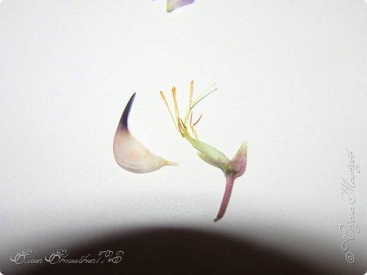 Здравствуйте, мастерицы! Вот для себя делала разбор цветка - Люпин, и подумала может кому пригодиться... Делюсь с вами))) Люпин -  красиво цветущий многолетник. Данный цветочек представитель семейства Бобовых.  Люпин представляет собой прямостоячий стебель с зелеными листьями и пестрыми цветами разных оттенков. ( Данное фото найдено на просторах интернета) фото 9