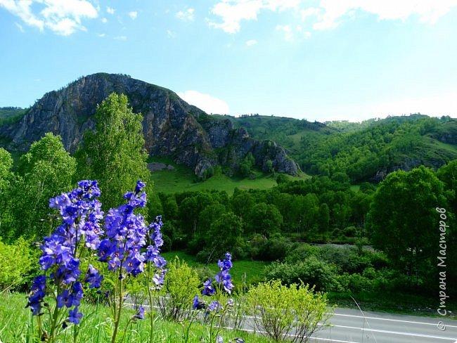 Это Иоанн Кронштадтский, святой праведник, сказал, что цветы – остатки рая на земле. И разве нельзя назвать райским местом этот родник в Бешпельтирском логу? У нас, в Горном Алтае, такая красота повсюду. И я приглашаю вас на неспешную прогулку по цветущему Алтаю. фото 100