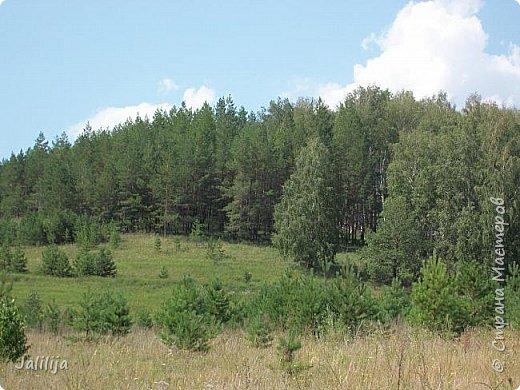 Несмотря на то, что летом много дел и в саду, и на огороде, мы часто бываем  в лесу. У нас удивительный лес! И вас, мои гости, приглашаю пройтись  по нашему лесу. фото 28