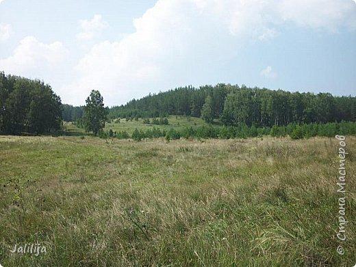 Несмотря на то, что летом много дел и в саду, и на огороде, мы часто бываем  в лесу. У нас удивительный лес! И вас, мои гости, приглашаю пройтись  по нашему лесу. фото 31