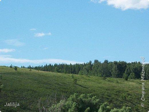 Несмотря на то, что летом много дел и в саду, и на огороде, мы часто бываем  в лесу. У нас удивительный лес! И вас, мои гости, приглашаю пройтись  по нашему лесу. фото 4