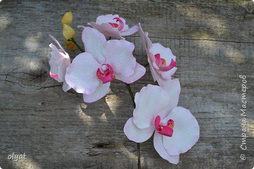 Добрый день! Веточку орхидеи сделала в подарок сестре, она любит орхидеи, но её цвести не хотят.  фото 1