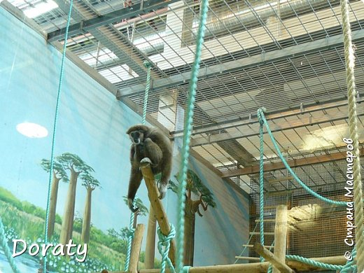 Всех приветствую! Сегодня приглашаю вас прогуляться по калининградскому зоопарку. В этом году зоопарку исполнилось 120 лет. В первые зоопарк распахнул свои двери для посетителей 21 мая в 1896 году. Тогда это был зоопарк г Кёнигсберга. На открытии было показано 893 особи 262 видов животных. Первым директором зоопарка был Г. Клаасс . Зоопарк быстро приобрел популярность и стал любимым местом отдыха у горожан. Зона отдыха занимала практически всю центральную часть зоопарка. Здесь располагались здания и сооружения, предназначенные для проведения различных развлекательных и увеселительных мероприятий: Концертный зал, вмещавший до 2000 человек (сгорел в 1919 г. и не восстанавливался больше, вместо него были построены два музыкальных павильона), и концертная площадка; Общественный дом с главным рестораном; читальный, музыкальный и выставочный павильоны; летние кафе и рестораны, площадки теннисного клуба «Тиргартен»; велотрек; игровая площадка для детей. При хорошей погоде играл духовой оркестр, а зимой в Концертном доме, проходили различные значимые мероприятия. фото 15