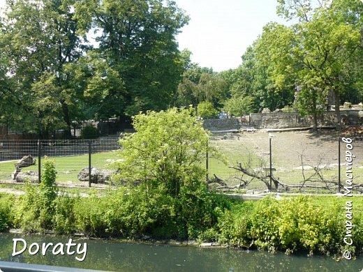 Всех приветствую! Сегодня приглашаю вас прогуляться по калининградскому зоопарку. В этом году зоопарку исполнилось 120 лет. В первые зоопарк распахнул свои двери для посетителей 21 мая в 1896 году. Тогда это был зоопарк г Кёнигсберга. На открытии было показано 893 особи 262 видов животных. Первым директором зоопарка был Г. Клаасс . Зоопарк быстро приобрел популярность и стал любимым местом отдыха у горожан. Зона отдыха занимала практически всю центральную часть зоопарка. Здесь располагались здания и сооружения, предназначенные для проведения различных развлекательных и увеселительных мероприятий: Концертный зал, вмещавший до 2000 человек (сгорел в 1919 г. и не восстанавливался больше, вместо него были построены два музыкальных павильона), и концертная площадка; Общественный дом с главным рестораном; читальный, музыкальный и выставочный павильоны; летние кафе и рестораны, площадки теннисного клуба «Тиргартен»; велотрек; игровая площадка для детей. При хорошей погоде играл духовой оркестр, а зимой в Концертном доме, проходили различные значимые мероприятия. фото 5