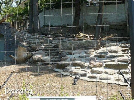 Всех приветствую! Сегодня приглашаю вас прогуляться по калининградскому зоопарку. В этом году зоопарку исполнилось 120 лет. В первые зоопарк распахнул свои двери для посетителей 21 мая в 1896 году. Тогда это был зоопарк г Кёнигсберга. На открытии было показано 893 особи 262 видов животных. Первым директором зоопарка был Г. Клаасс . Зоопарк быстро приобрел популярность и стал любимым местом отдыха у горожан. Зона отдыха занимала практически всю центральную часть зоопарка. Здесь располагались здания и сооружения, предназначенные для проведения различных развлекательных и увеселительных мероприятий: Концертный зал, вмещавший до 2000 человек (сгорел в 1919 г. и не восстанавливался больше, вместо него были построены два музыкальных павильона), и концертная площадка; Общественный дом с главным рестораном; читальный, музыкальный и выставочный павильоны; летние кафе и рестораны, площадки теннисного клуба «Тиргартен»; велотрек; игровая площадка для детей. При хорошей погоде играл духовой оркестр, а зимой в Концертном доме, проходили различные значимые мероприятия. фото 8