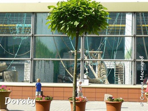 Всех приветствую! Сегодня приглашаю вас прогуляться по калининградскому зоопарку. В этом году зоопарку исполнилось 120 лет. В первые зоопарк распахнул свои двери для посетителей 21 мая в 1896 году. Тогда это был зоопарк г Кёнигсберга. На открытии было показано 893 особи 262 видов животных. Первым директором зоопарка был Г. Клаасс . Зоопарк быстро приобрел популярность и стал любимым местом отдыха у горожан. Зона отдыха занимала практически всю центральную часть зоопарка. Здесь располагались здания и сооружения, предназначенные для проведения различных развлекательных и увеселительных мероприятий: Концертный зал, вмещавший до 2000 человек (сгорел в 1919 г. и не восстанавливался больше, вместо него были построены два музыкальных павильона), и концертная площадка; Общественный дом с главным рестораном; читальный, музыкальный и выставочный павильоны; летние кафе и рестораны, площадки теннисного клуба «Тиргартен»; велотрек; игровая площадка для детей. При хорошей погоде играл духовой оркестр, а зимой в Концертном доме, проходили различные значимые мероприятия. фото 11