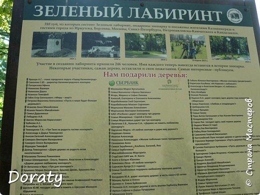 Всех приветствую! Сегодня приглашаю вас прогуляться по калининградскому зоопарку. В этом году зоопарку исполнилось 120 лет. В первые зоопарк распахнул свои двери для посетителей 21 мая в 1896 году. Тогда это был зоопарк г Кёнигсберга. На открытии было показано 893 особи 262 видов животных. Первым директором зоопарка был Г. Клаасс . Зоопарк быстро приобрел популярность и стал любимым местом отдыха у горожан. Зона отдыха занимала практически всю центральную часть зоопарка. Здесь располагались здания и сооружения, предназначенные для проведения различных развлекательных и увеселительных мероприятий: Концертный зал, вмещавший до 2000 человек (сгорел в 1919 г. и не восстанавливался больше, вместо него были построены два музыкальных павильона), и концертная площадка; Общественный дом с главным рестораном; читальный, музыкальный и выставочный павильоны; летние кафе и рестораны, площадки теннисного клуба «Тиргартен»; велотрек; игровая площадка для детей. При хорошей погоде играл духовой оркестр, а зимой в Концертном доме, проходили различные значимые мероприятия. фото 13