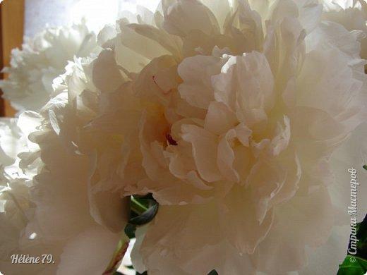 """""""Утренним солнцем давно  Чуткий мой сон озарён. Дрогнули вежды. В окно  Розовый стукнул пион. фото 8"""