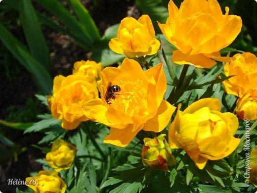 Насекомых разных много, Кто питается травою, Кто пыльцу с цветка снимает, Кто коренья поедает.  Кто-то кровь употребляет, Кто-то фрукты поглощает, В общем разные бывают, Насекомых мы всех знаем!  (В. Леонов) фото 2