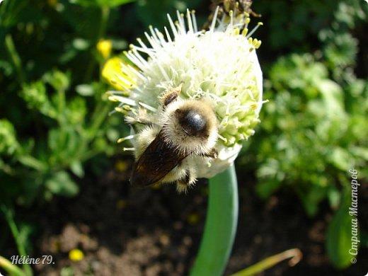 Насекомых разных много, Кто питается травою, Кто пыльцу с цветка снимает, Кто коренья поедает.  Кто-то кровь употребляет, Кто-то фрукты поглощает, В общем разные бывают, Насекомых мы всех знаем!  (В. Леонов) фото 26