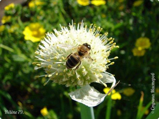 Насекомых разных много, Кто питается травою, Кто пыльцу с цветка снимает, Кто коренья поедает.  Кто-то кровь употребляет, Кто-то фрукты поглощает, В общем разные бывают, Насекомых мы всех знаем!  (В. Леонов) фото 27