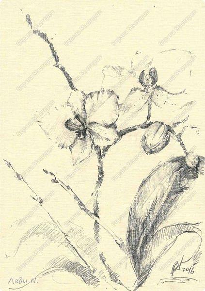 Доброе время суток, уважаемые обитатели СМ!  Какое лето без цветов? Конечно же неправильное! Отсюда вывод - надо рисовать цветы! Ну а что с меня взять? Розы меня прельщают крайне редко... Я певец сорняков. Может быть один из последних:) Надеюсь, не единственный:)  Красота бывает незаметной. Но тем больше впечатляет, когда приглядишься. Раз увидел - взгляд не оторвать. Пустырник - один из самых изящных растений, а сочетание нежных, бледных цветов и тёмных бархатистых листьев завораживают. Вот он, мой прекрасный, изящный цветок! фото 11