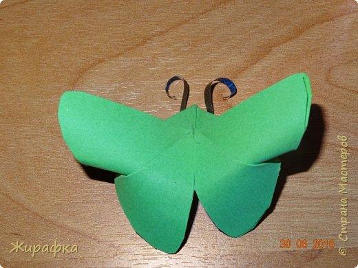 Бабочки... фото 16