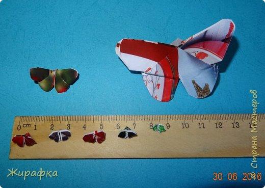 Бабочки... фото 26