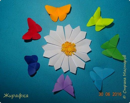 Бабочки... фото 29