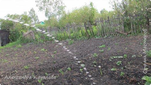 Здравствуйте!  А вы когда- нибудь пробовали фотографировать струю воды из шланга при поливе огорода? Вот, что получилось у моих старших дочерей. фото 2