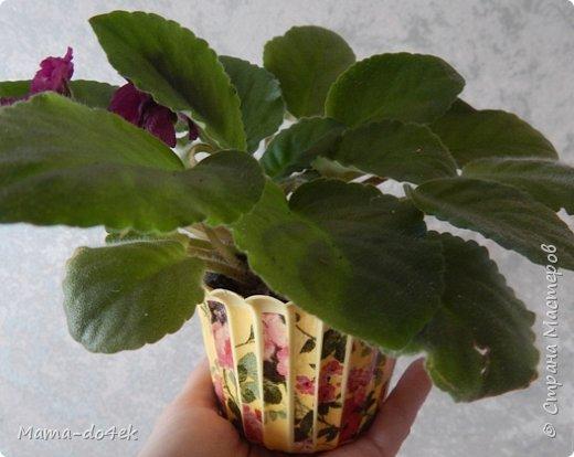 Здравствуйте, все-все жители Страны Мастеров! Недавно panta86 в своем блоге поинтересовалась, как обстоят дела у мастериц на их подоконниках. У меня, конечно, не так все устроено со смыслом, но есть, что показать. Большей частью не на подоконниках, а так просто, на цветах. Зимой налепилась куча всяких мимишных созданий и украшалочек для моих любимых цветочков. Теперь они в каждой комнате на всех цветочках сидят, на меня глядят, радуют. Вот гномик из соленого теста, а над ним бабочка из пластиковых бутылок. фото 8