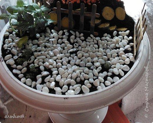Вот такой мини-сад в вазоне у меня получился. Очень увлекательное занятие оказалось! фото 4