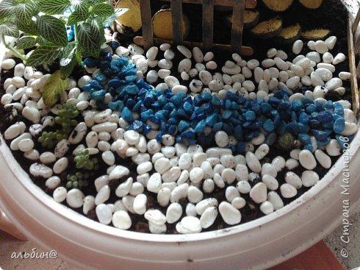 Вот такой мини-сад в вазоне у меня получился. Очень увлекательное занятие оказалось! фото 5