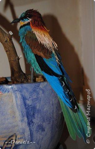 """Очередная птичка. Открыла вот для себя щурок, классные птички, в хвосте есть два пера очень интересной формы - с удлинненым """"носиком"""":) Это вот золотистая, хотя, конечно, по ней не скажешь, столько голубых оттенков... но с учеными не поспоришь) фото 2"""