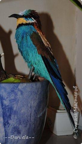 """Очередная птичка. Открыла вот для себя щурок, классные птички, в хвосте есть два пера очень интересной формы - с удлинненым """"носиком"""":) Это вот золотистая, хотя, конечно, по ней не скажешь, столько голубых оттенков... но с учеными не поспоришь) фото 1"""