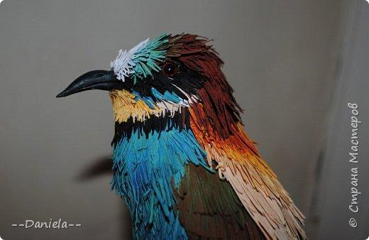 """Очередная птичка. Открыла вот для себя щурок, классные птички, в хвосте есть два пера очень интересной формы - с удлинненым """"носиком"""":) Это вот золотистая, хотя, конечно, по ней не скажешь, столько голубых оттенков... но с учеными не поспоришь) фото 5"""