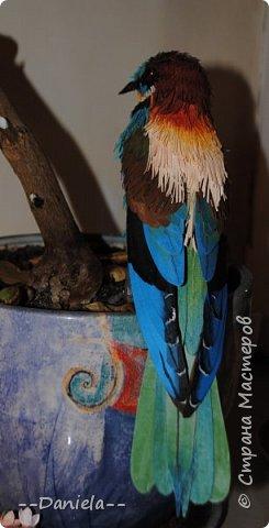 """Очередная птичка. Открыла вот для себя щурок, классные птички, в хвосте есть два пера очень интересной формы - с удлинненым """"носиком"""":) Это вот золотистая, хотя, конечно, по ней не скажешь, столько голубых оттенков... но с учеными не поспоришь) фото 3"""