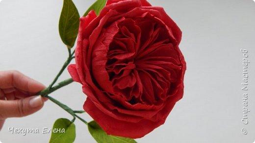 Пионовидные роза по МК Надежды Коноваловой. Спасибо ей огромное! Это резинка для волос.  фото 2