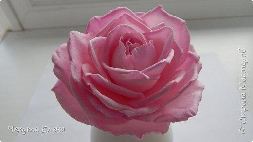 Пионовидные роза по МК Надежды Коноваловой. Спасибо ей огромное! Это резинка для волос.  фото 10